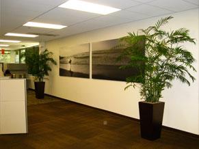 Showroom Floor. Office Space Accents