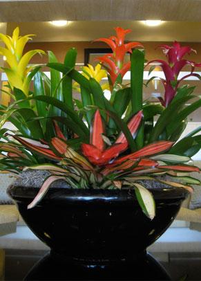 Junipers Inc Interior Plantscaping San Diego